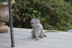 Don de mon bébé singe